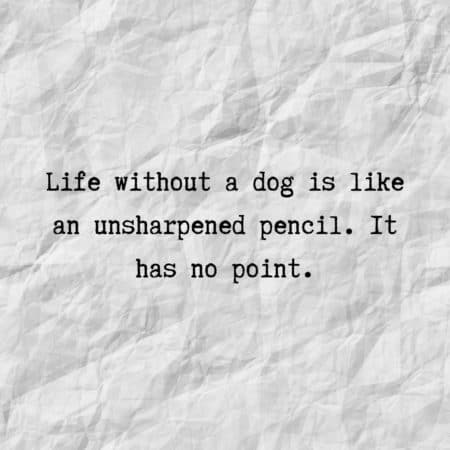Life without a dog is like an unsharpened pencil. It has no point.