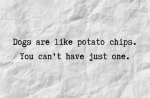 Dogs are like potato chips. You can't have just one.