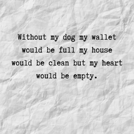 Without my dog my wallet would be full my house would be clean but my heart would be empty.