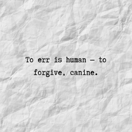 To err is human — to forgive, canine.
