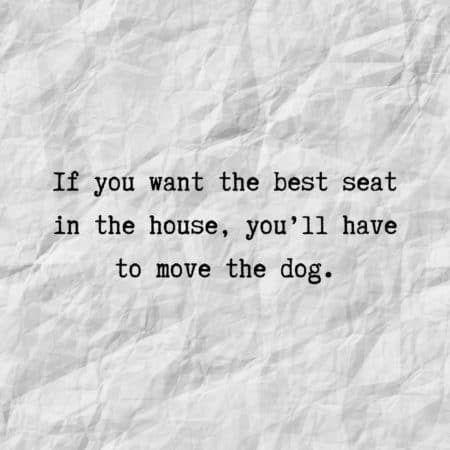 If you want the best seat in the house, you'll have to move the dog.