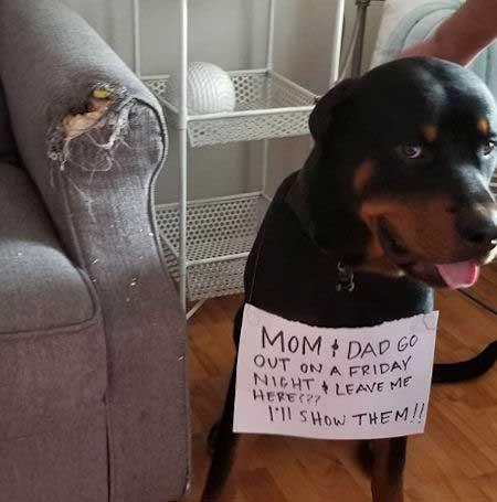 Dog ate the sofa