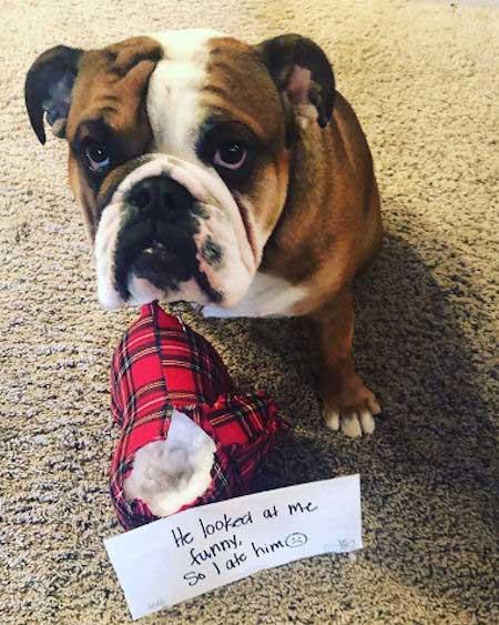 Dog ate something