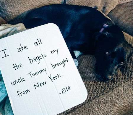 Dog shamed for eating all the bagels