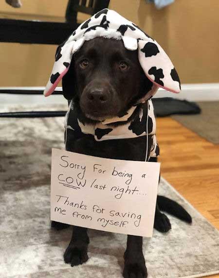 dog dressed up like a cow