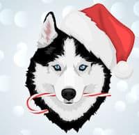 cartoon husky for christmas