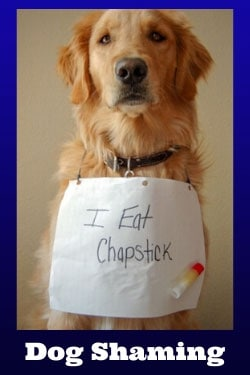 dog shaming category