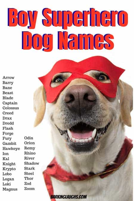 Check out these boy Superhero dog names! Are you looking for male dog names? We have over 350 Boy Dog Names with the meanings! #barkinglaughs #dognames #puppynames #boydognames