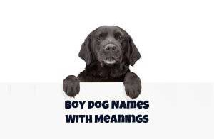 boy dog names and meaning