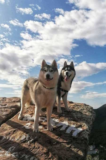 two awesome huskies standing on a rock