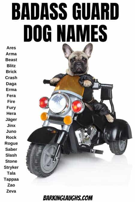 So, you need a guard dog name.  We have you covered with this badass dog names list for both girl dogs and boy dogs. Several tough dog names for your new puppy! #barkinglaughs #puppynames #dognames