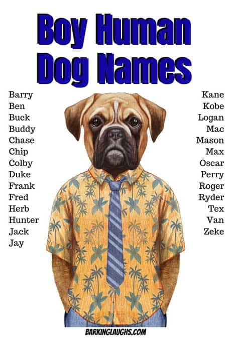 Check out these boy human dog names! Are you looking for male dog names? We have over 350 Boy Dog Names with the meanings! #barkinglaughs #dognames #puppynames #boydognames