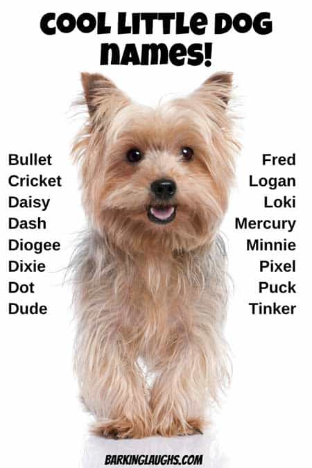 What are some cool little dog names? Over 100 Cool dog names to name your new puppy. Each dog name also has a meaning so you don't look like a goof at the dog park. Boys and girls selection of puppy names. #barkinglaughs #puppynames #cooldognames