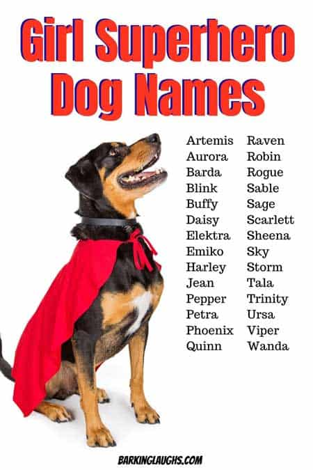 girl superhero dog names. Are you looking for awesome female dog names? We have 350 Girl Dog Names with the meanings! #barkinglaughs #dognames #puppynames #girldognames