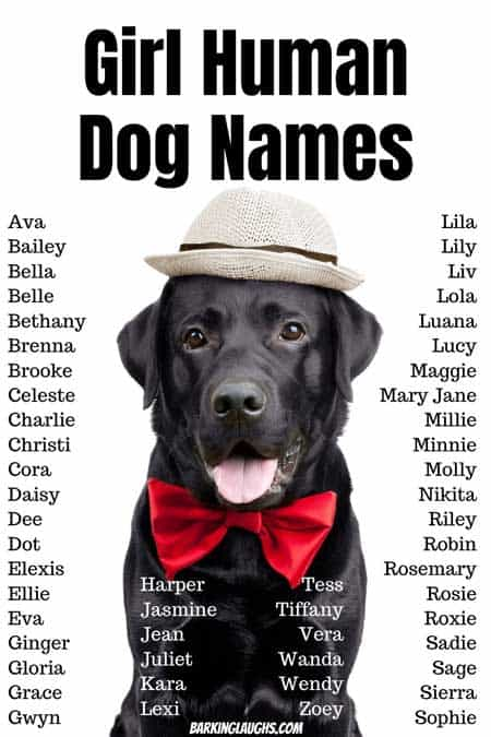 Girl human dog names. Are you looking for awesome female dog names? We have 350 Girl Dog Names with the meanings! #barkinglaughs #dognames #puppynames #girldognames