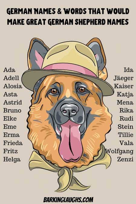 Cool German names for a German Shepherd! Name your GSD with this list of over 150 German Shepherd Names. #barkinglaughs #dognames #germanshepherd