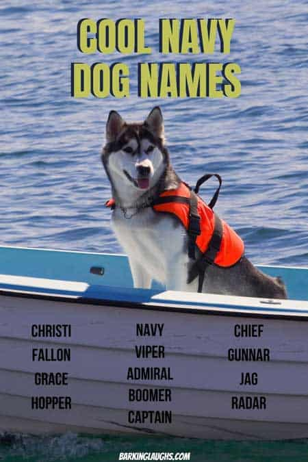 Are you looking for some Navy military dog names for your new best friend? We have several military dog name ideas for you to look through. Each name also has a meaning so you don't look like a goof at the dog park. #barkinglaughs #puppynames #dognames