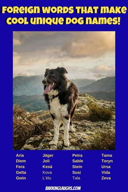 """Foreign Words that would make great unique dog names. Over 200 unique pet names for both boy dogs and girl dogs. Don't mess up your puppy with a goofy name. Each name also has a meaning so you don't look like a goof at the dog park. #barkinglaughs #puppynames #uniquedognames"""""""