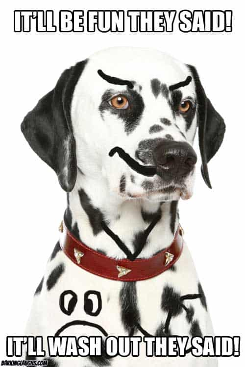 Dalmatian meme it'll wash out