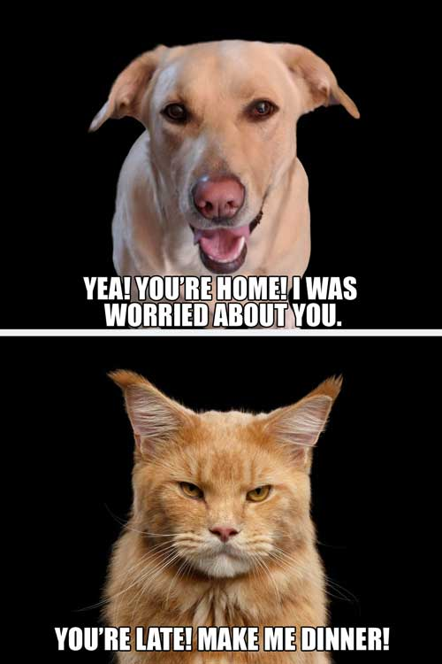 Dog Vs. Cat meme