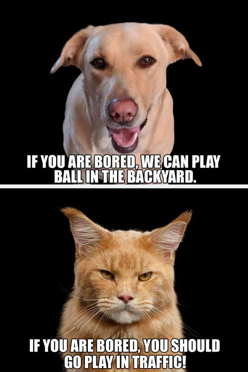 Funny Dog and Cat different perspectives about bordom