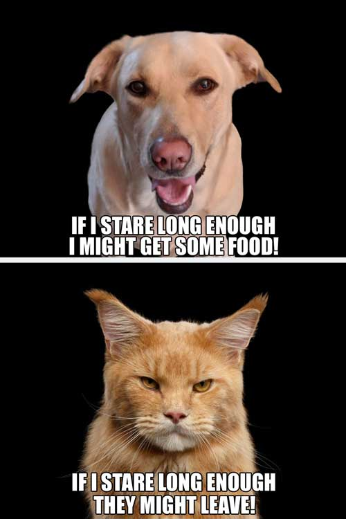 Dog and Cat different perspectives Meme about staring