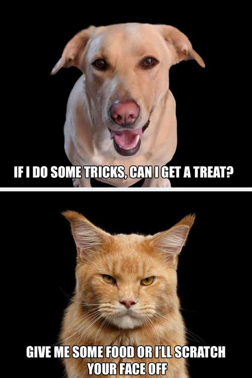 Treat perspective dog vs. cat