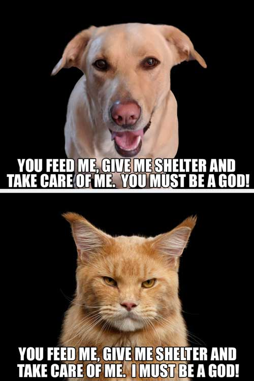 dog and cat god picture