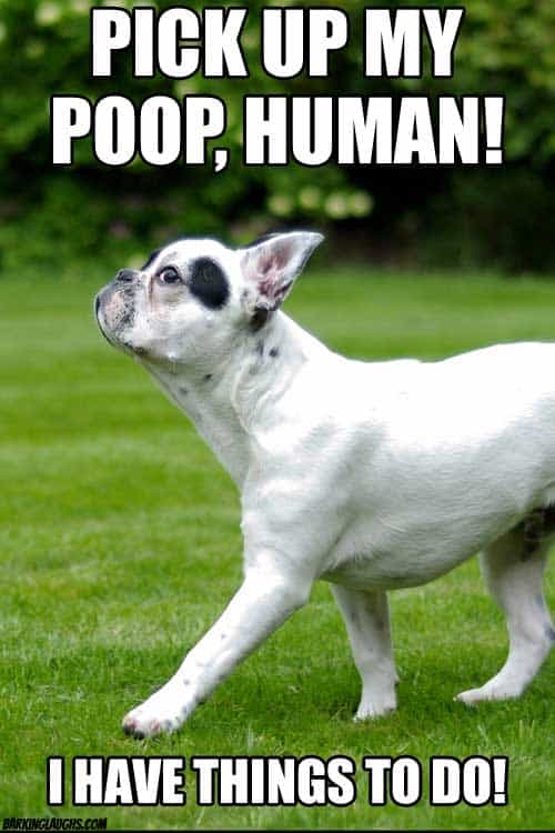 Snotty dog meme