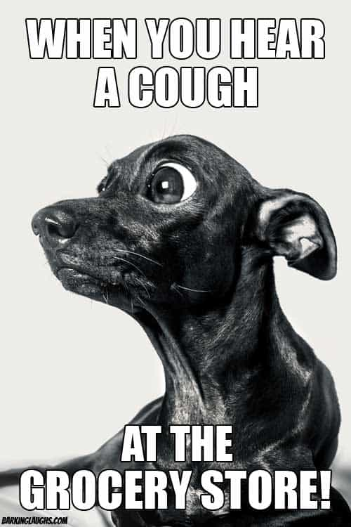coronavirus meme with a dog about grocery shopping and hearing a cough