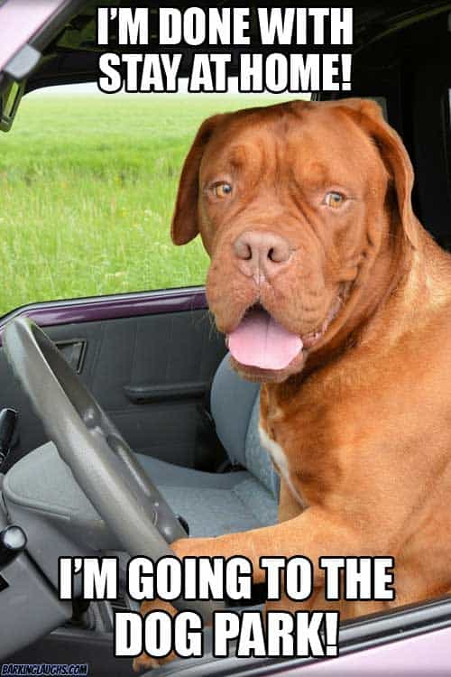 coronavirus meme with a dog about stay at home