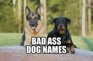 BAD ASS DOG NAMES