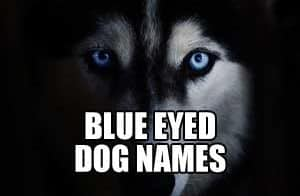 BLUE EYED DOG NAMES