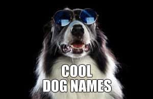 COOL DOG NAMES