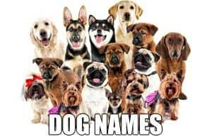 DOG NAMES MAIN PAGE