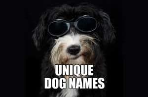 UNIQUE DOG NAMES FEATURE