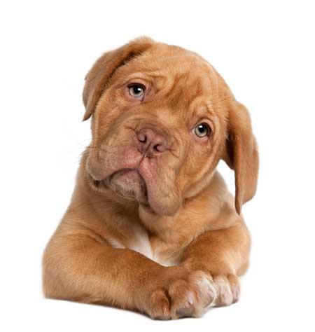 cute puppy with a head tilt