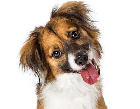 goofy dog with a head tilt