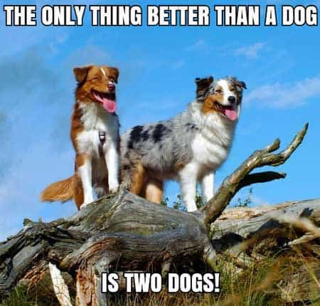 THe only thing better than a dog is two dogs