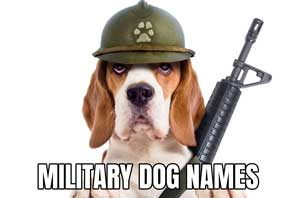 feature image for military dog names